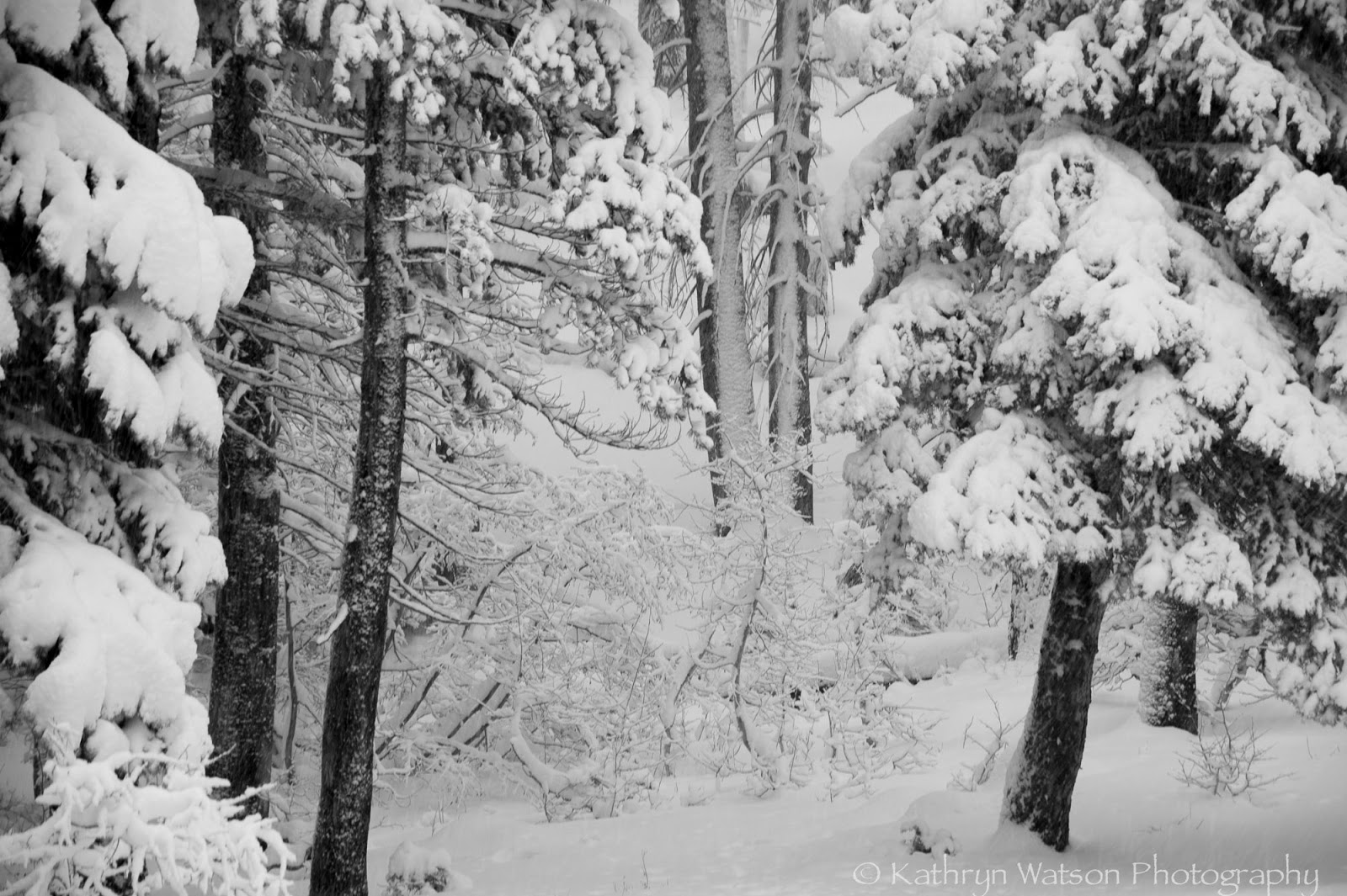 the magical event of the first fall of snow So as a special ode to snow, i've compiled a list of quotes on the subject for all  of you  the first fall of snow is not only an event, it is a magical event you go to .