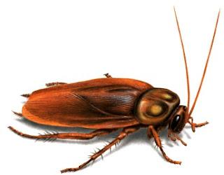 Foto de la cucaracha