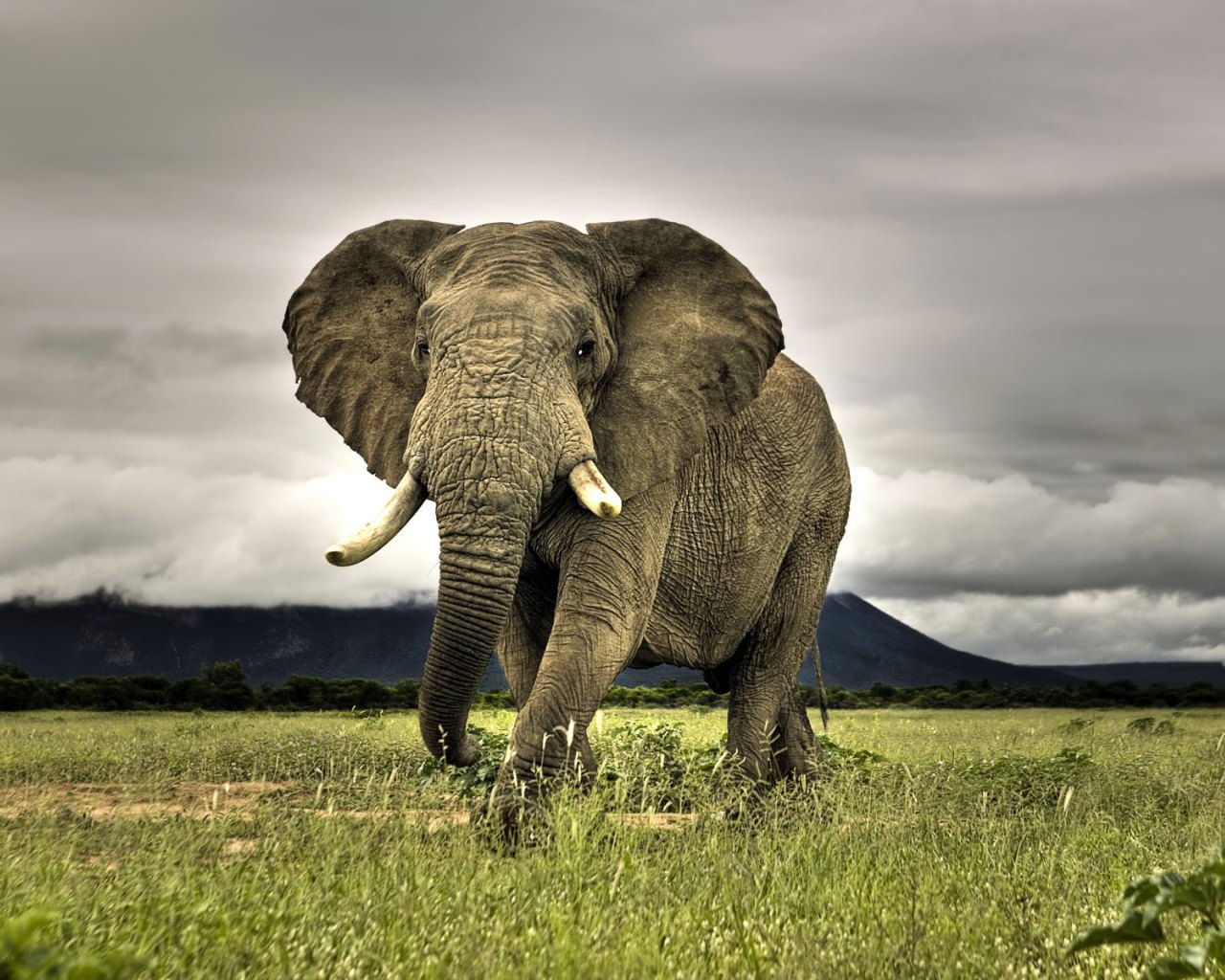 Elephant Animal Safaris on animals rated by intelligence