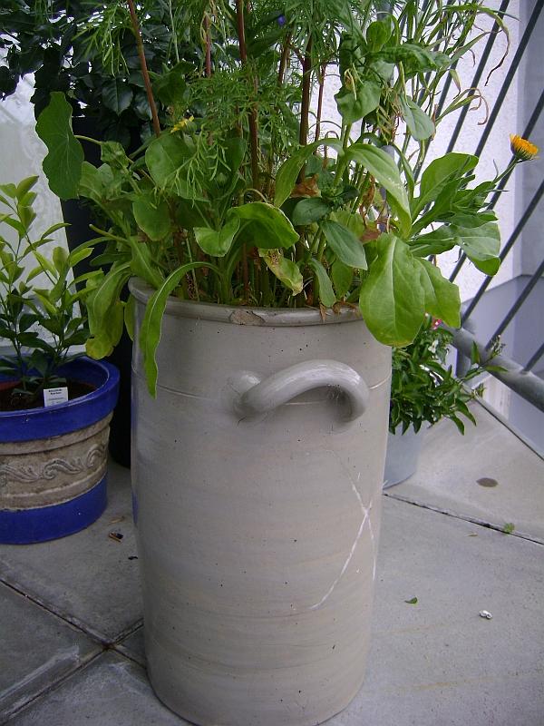 terrasse bepflanzen kübel