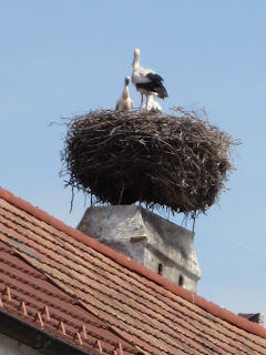 Stok and young ones being fed atop huge nest resting on top of a flat chimney shieldcoi