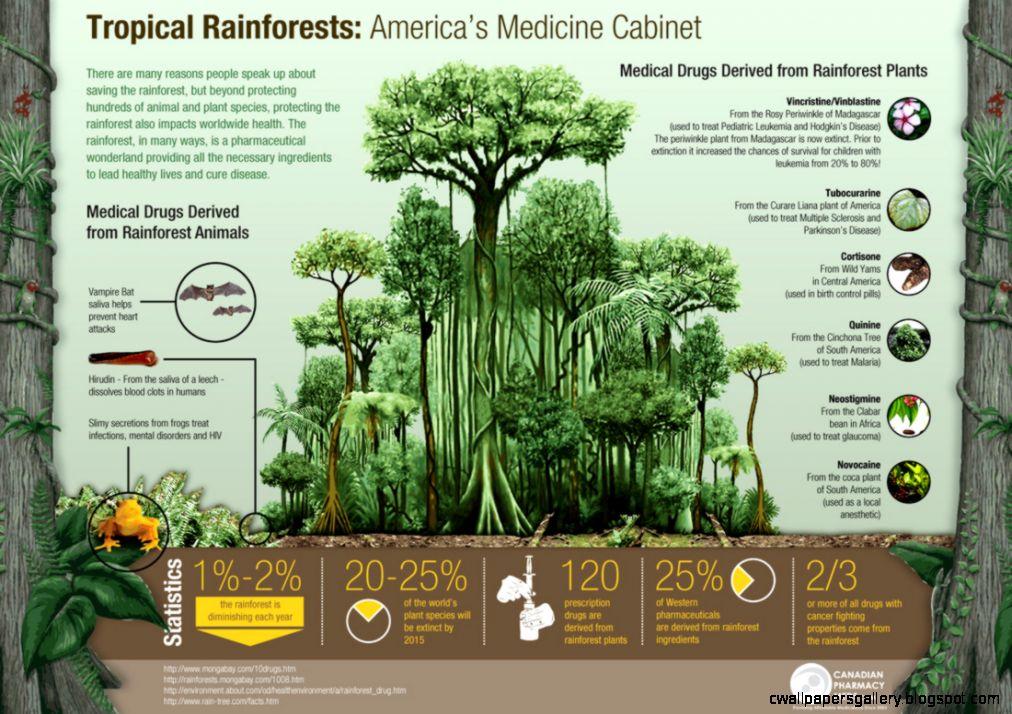 Human Impacts   Tropical Rainforest Biome