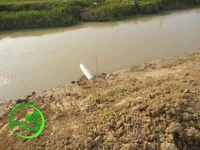 """FOTO : Gorong - gorong dari pipa 8"""" hasil udunan petani. Sisi arah ke sungai."""