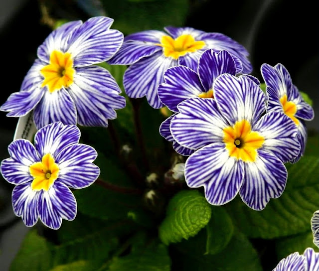 Bunga Mekar Menawan Mata, Hati Dan Minda