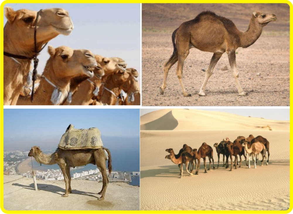 essays on deserts Advertisements: read this essay to learn about deserts after reading this essay you will learn about: 1 subject-matter to desert 2 types of desert landscape 3.