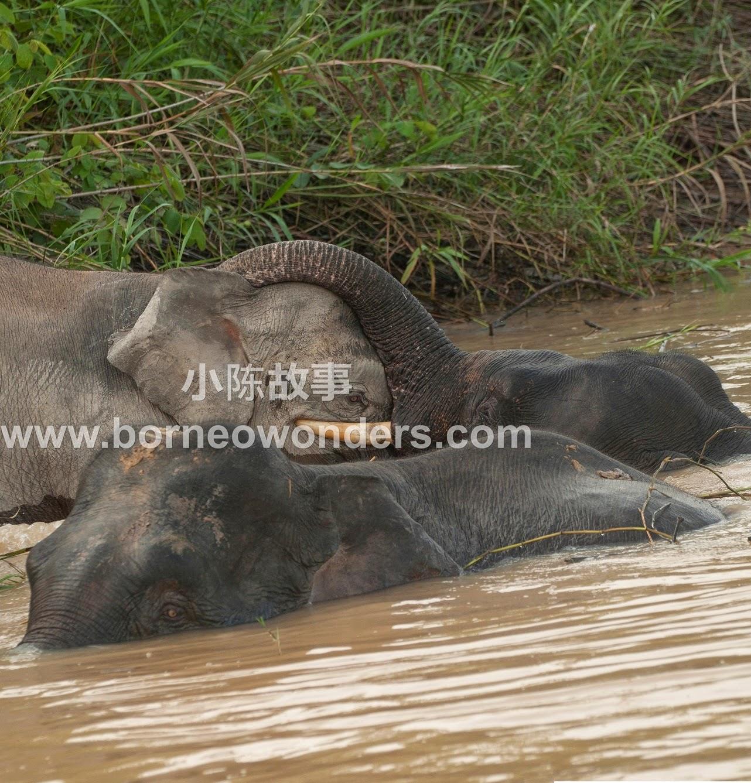 Borneo wonders
