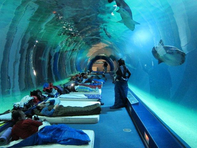 Friendly valencia atr vete a dormir con tiburones en el for Promociones oceanografic