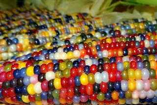 multi-colored corn, Miscellaneous, hoax or fact, Oklahoma