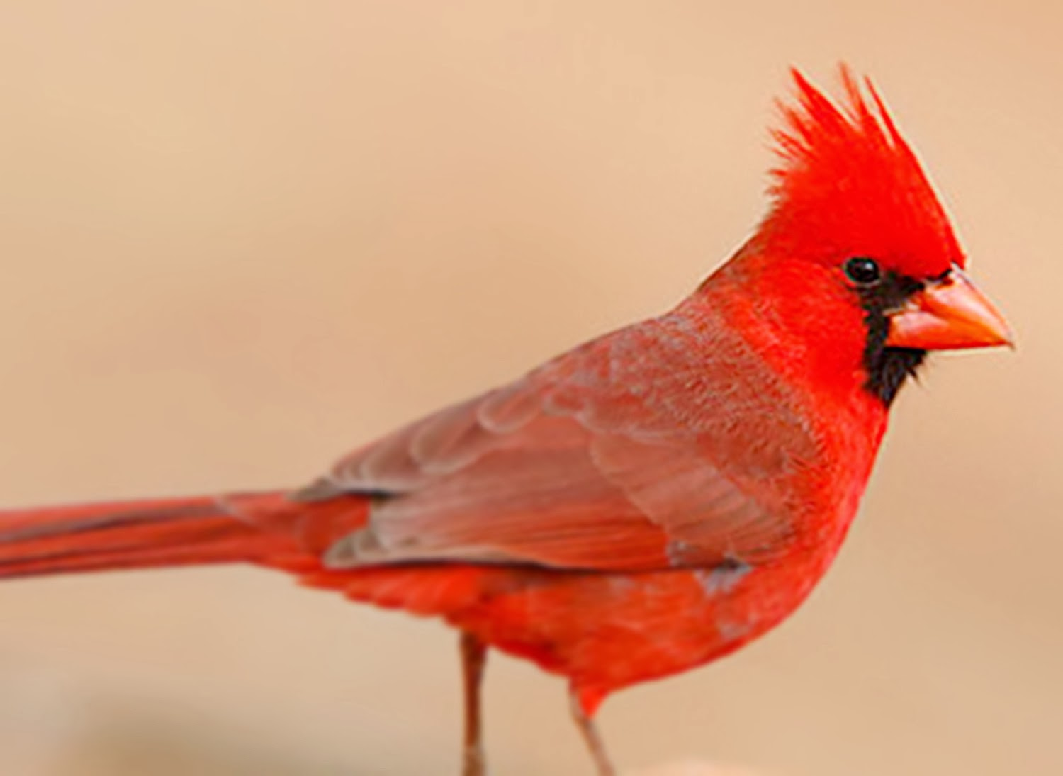 amazing event in the world most unique birds in indonesia and the