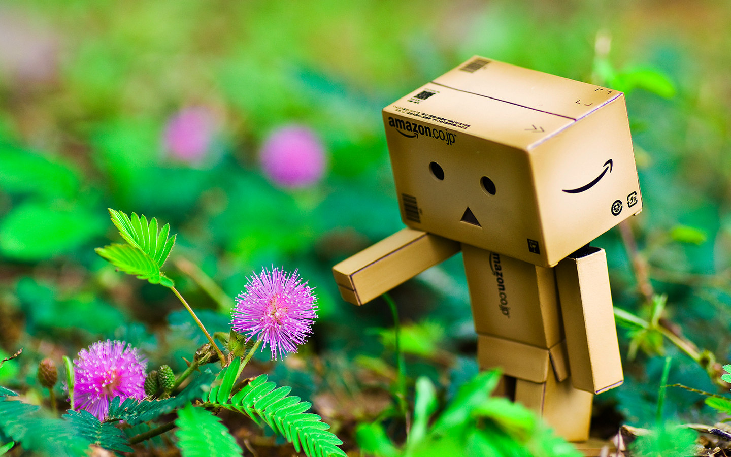 Danbo_Danboard_photo_262144