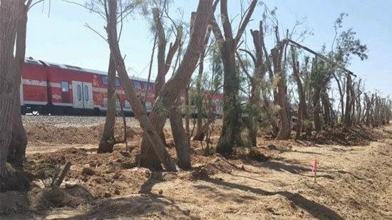 أشجار الغرقد