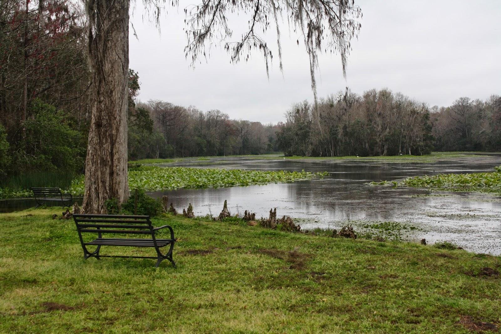 Wacissa River, Florida laceupandwalk.blogspot.com