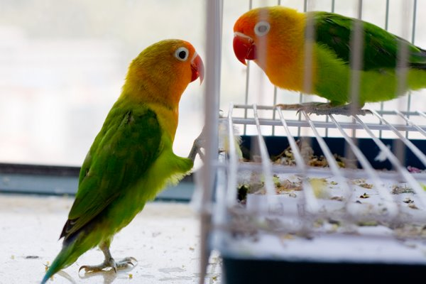 Beautiful Love Birds 4