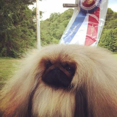 Dog Show Poop Winners June 04 07 2015