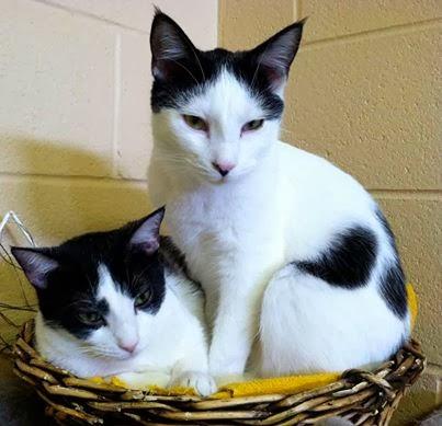 black white cats