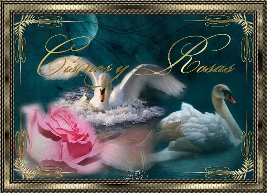 Cisnes y Rosas