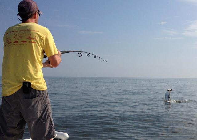 Myrtle beach fishing report tarpon fishing report aug 2013 for Myrtle beach surf fishing