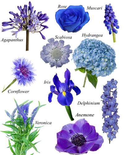 blue flowers, blue wedding flowers, blåa blommor, blåa blommor bröllop, blå brudbukett, brudbukett blåa blommor