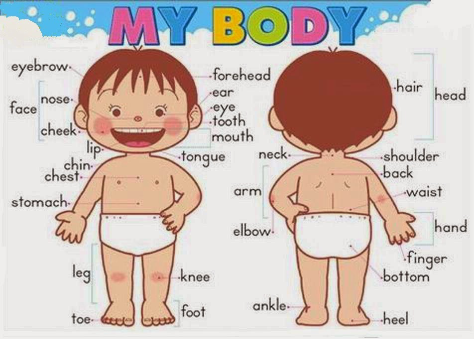 You Have My Body Parts If I Am Girl And on Identification Worksheets Kids Learning Worksheet Human Body Parts With Names
