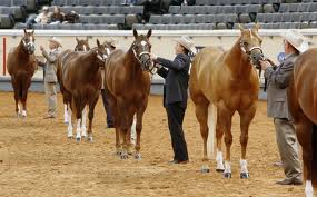 American Quarter Horse images