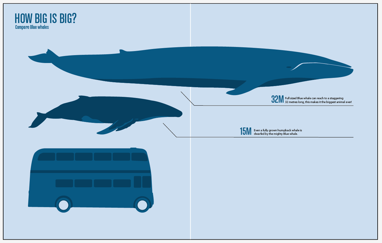 Whale Shark Size Comparison Related Keywords - Whale Shark Size ... Whale Shark Size
