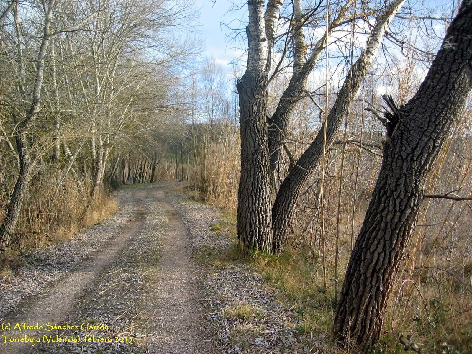 torrebaja-valencia-camino-chopos-ribera