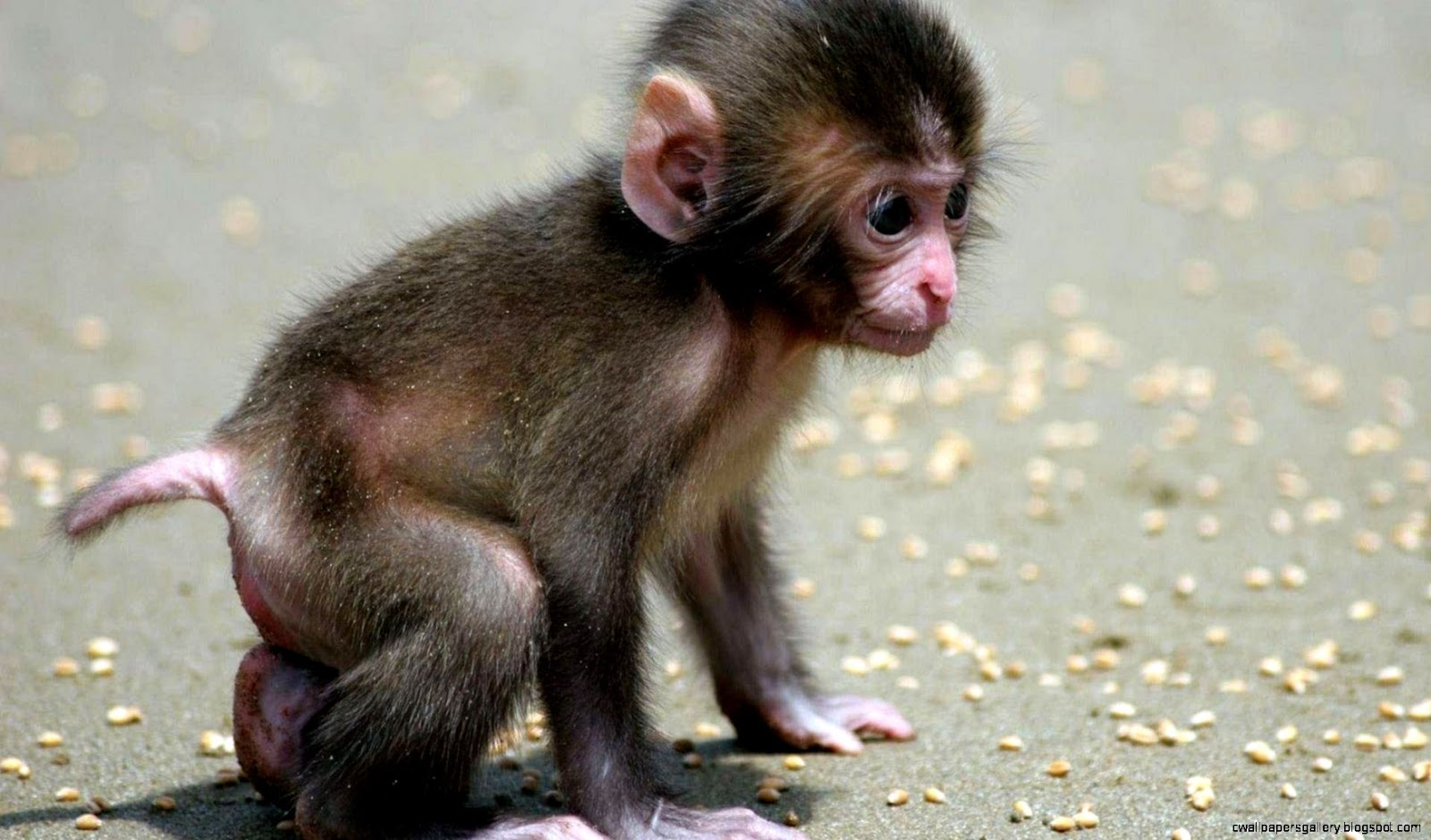 Baby Animal Wallpaper | Wallpapers Gallery