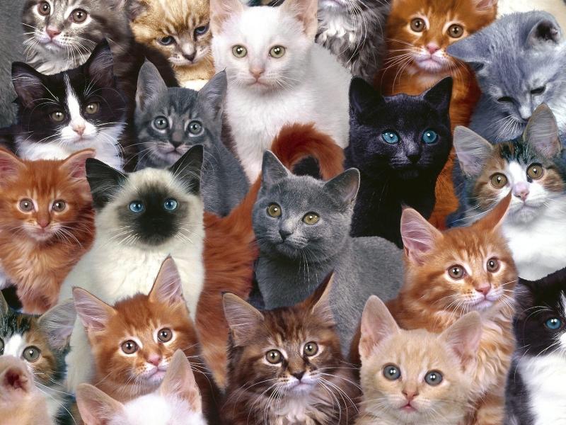yavru+kedi+resimleri - Kediler ve Kediler