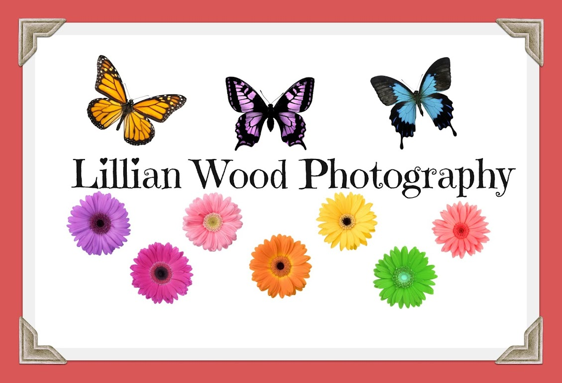 Lillian Wood Photography