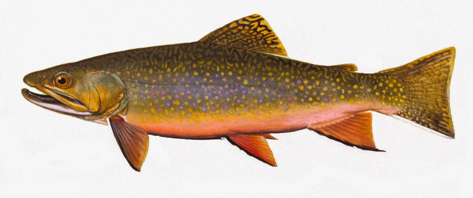Take it outside fish iowa iowa fish species trout family for Iowa fish hatcheries