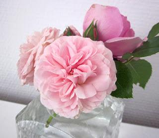 Rosen Larissa und Rosenfee in der Vase