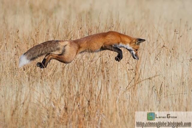 foto terbaik hewan liar
