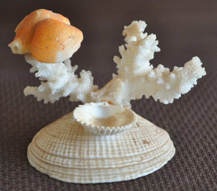 Tips And Ideas For Crafts And Hobbyists Easy Seashell Crafts For
