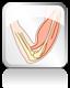 Kaulu un muskuļu sistēma