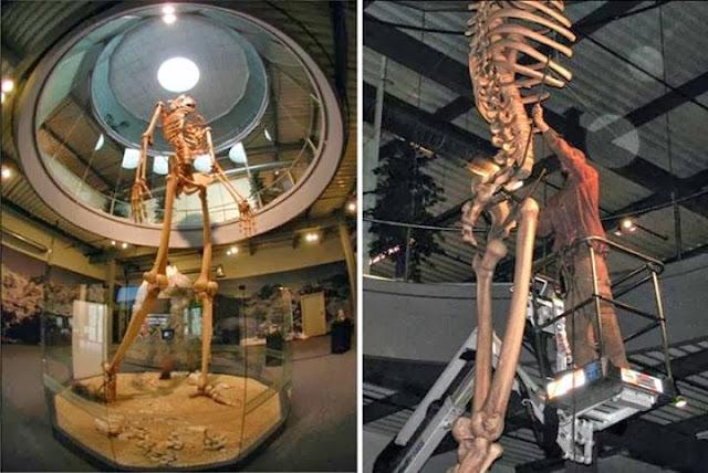 Nephalim Giant Remains Found In Ecuador