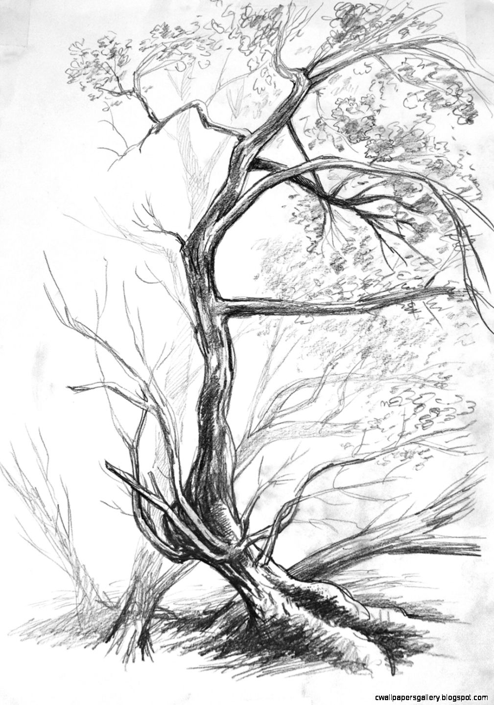 Nature objects  nature drawing