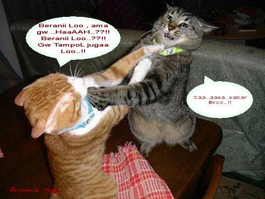 Kucing DueL, - Batu Akik Agate