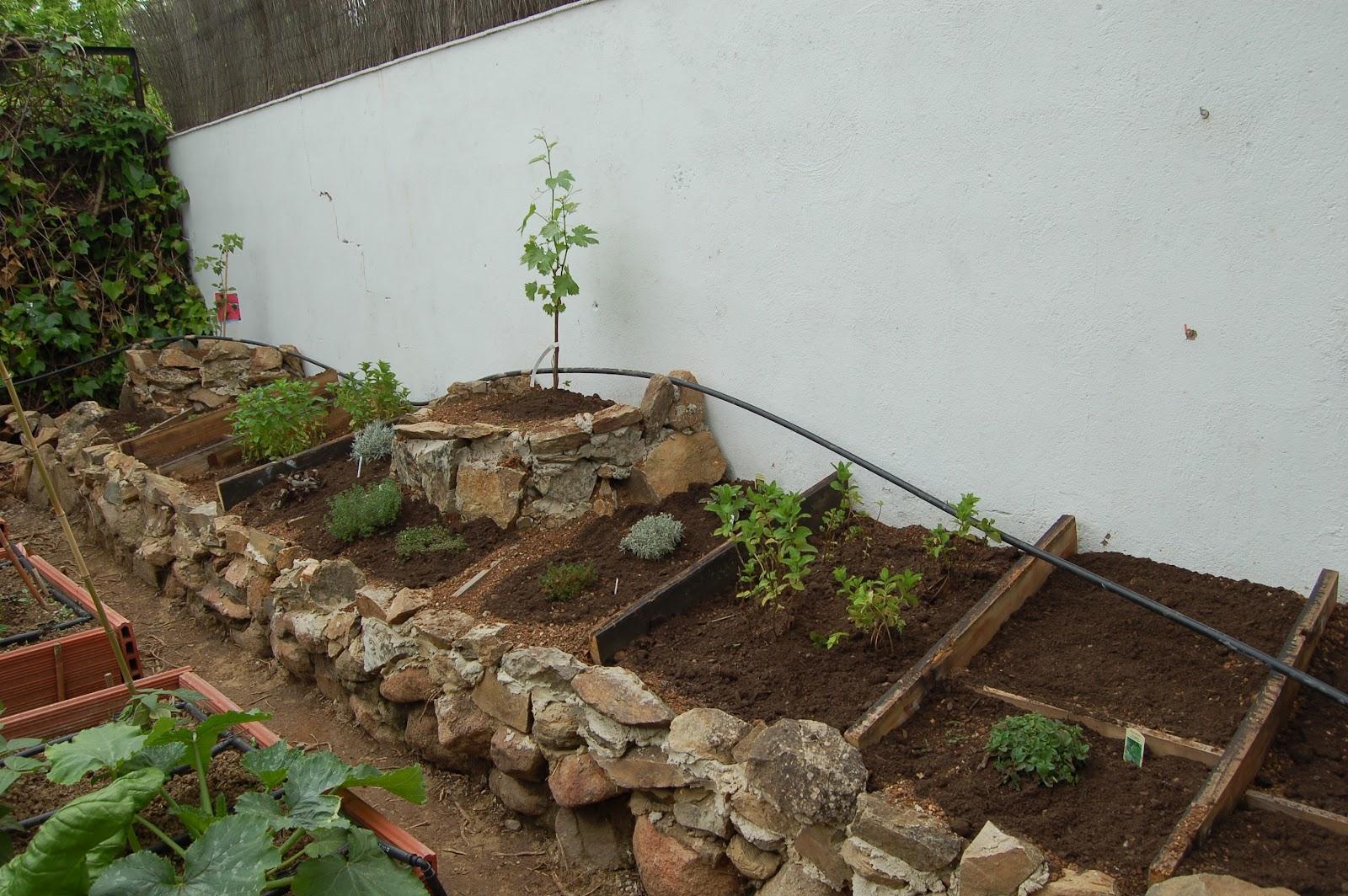 El huerto casero de ana las plantas arom ticas en el huerto - Huerto de plantas aromaticas ...