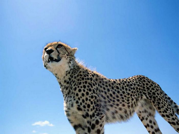 wild animal wallpapers images pics