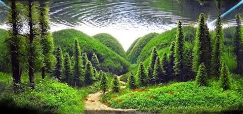 10 Landskap Akuarium Yang Awesome
