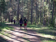 El camí esdevé un passeig suau i molt agradable