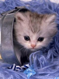 Hình nền mèo ngộ nghĩnh dễ thương - Hình ảnh ảnh nền những chú mèo đẹp