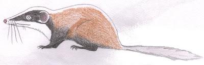 mamiferos del triasico Kuehneotherium