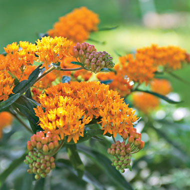 the best hot weather plants for your yard