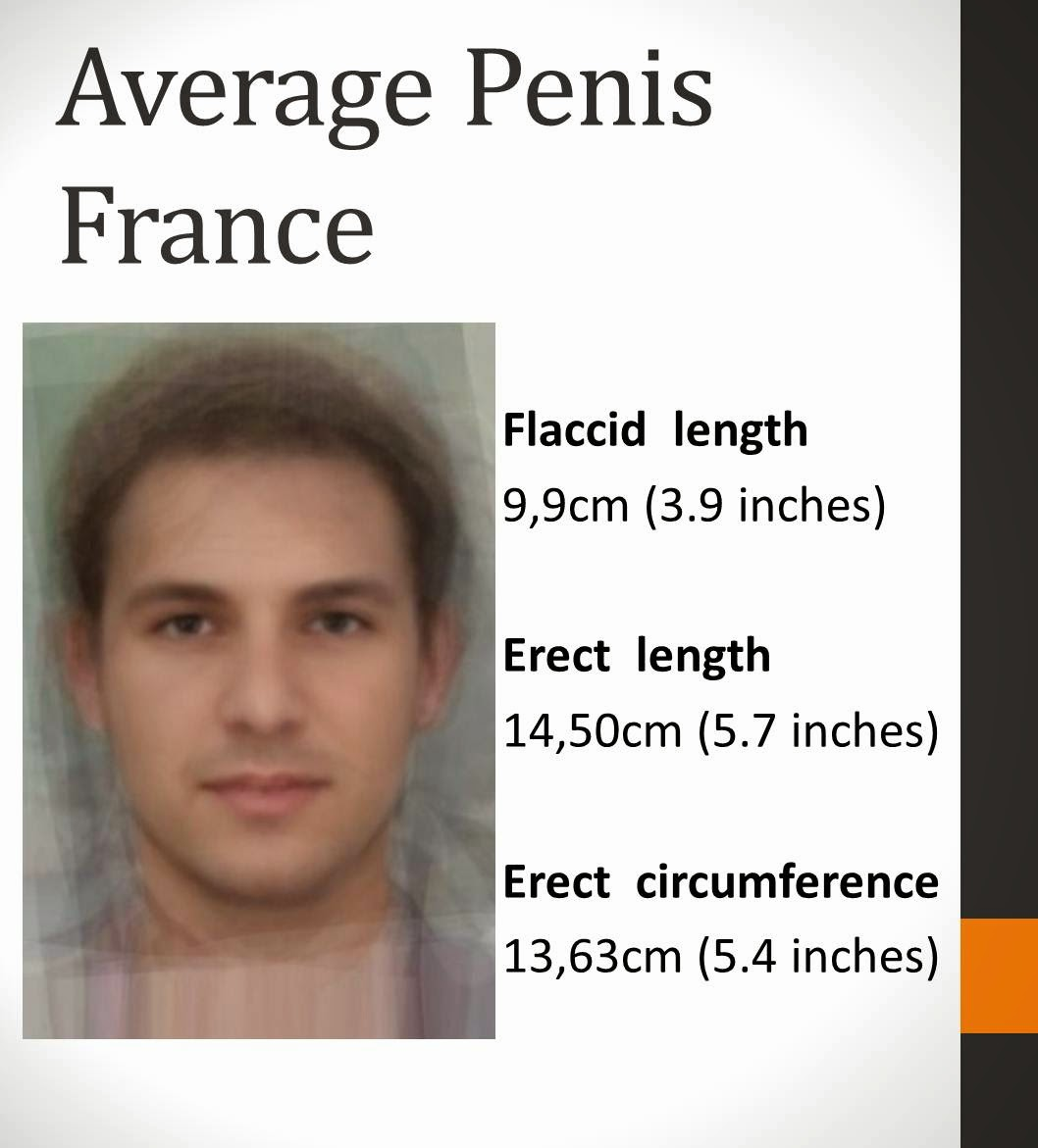 Average Penis Size Pictures
