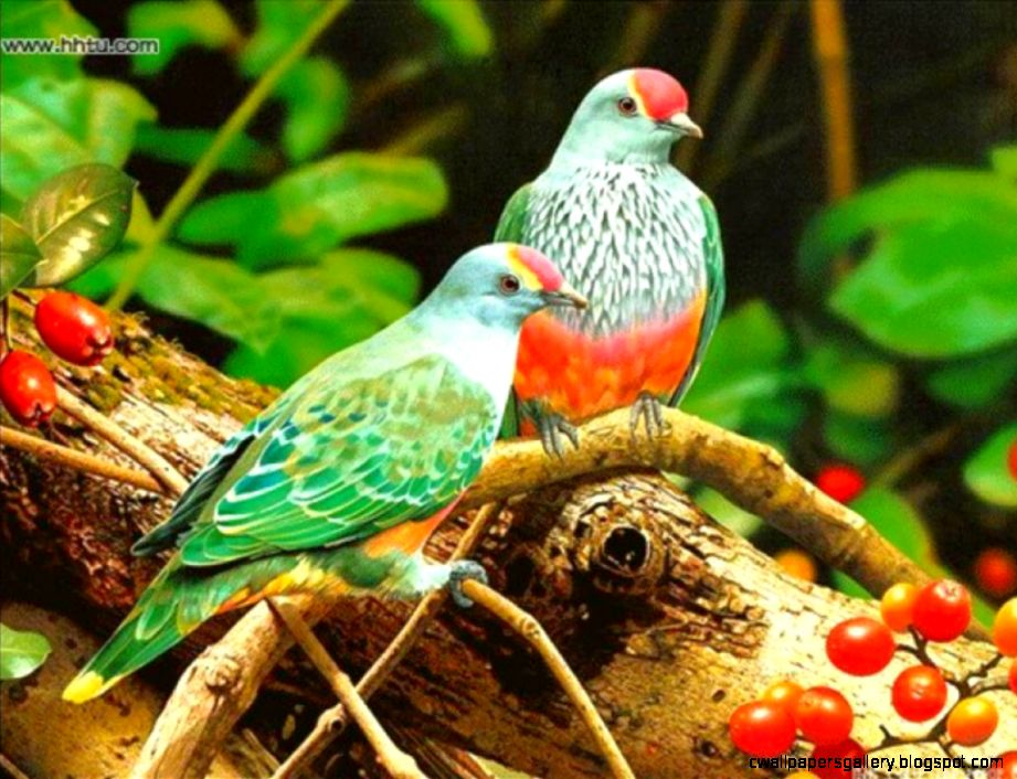 Birds Wallpapers   Wallpapers High Definition