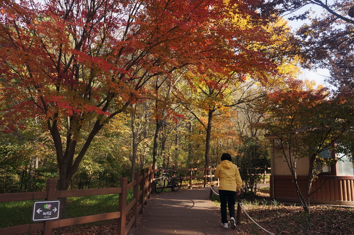Daegu Arboretum filled with maple trees