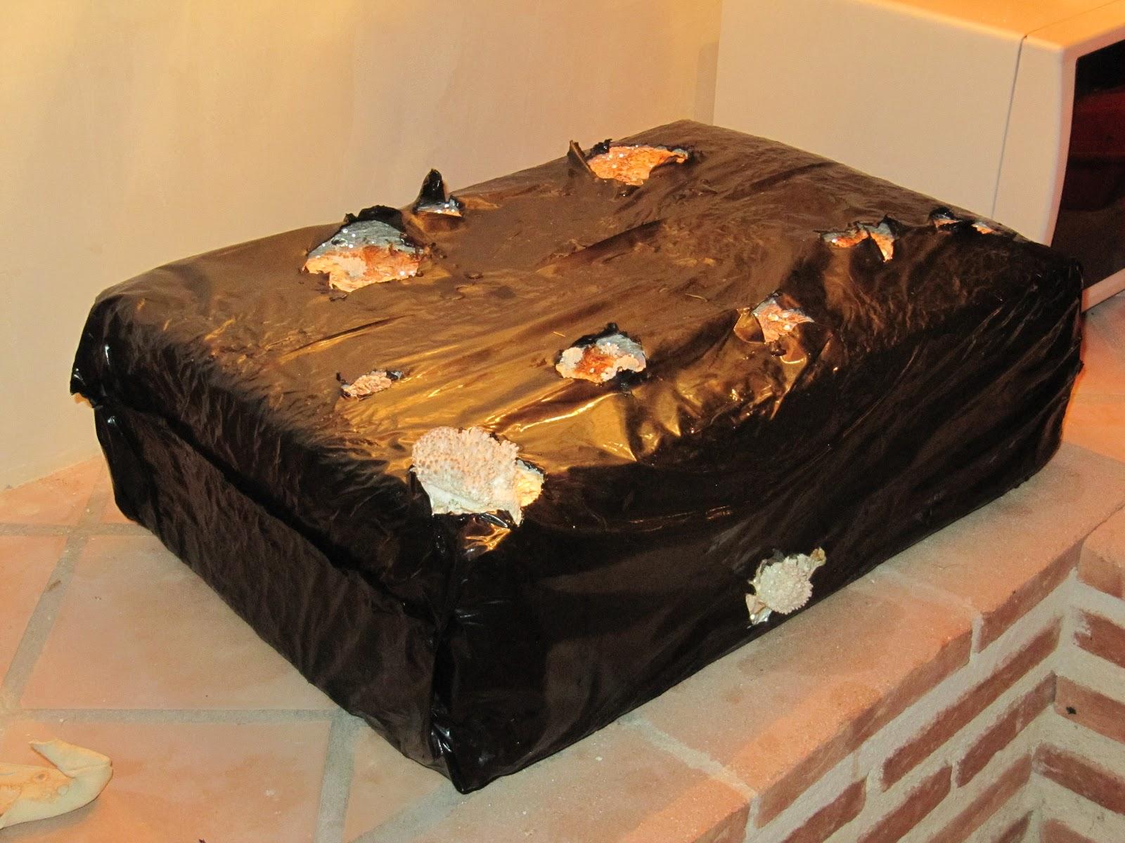 El huerto de cholo moratalla setas en la bodega for Como iniciar un vivero en casa