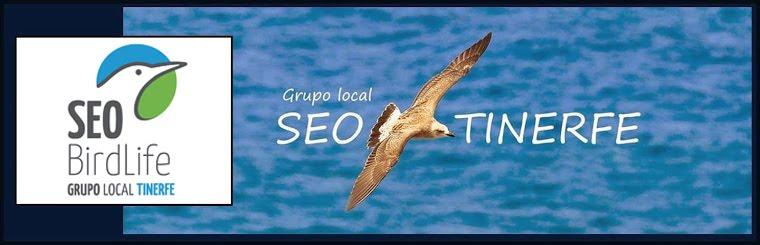 Grupo Local SEO-TINERFE