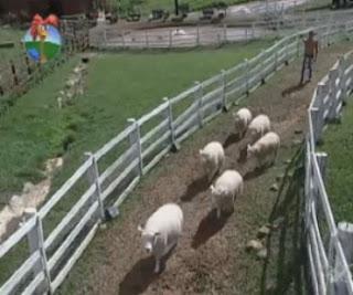 A Fazenda de verão sem animais